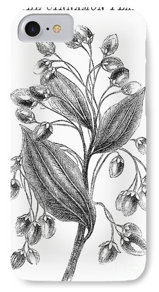 Botany: Cinnamon Plant Phone Case by Granger