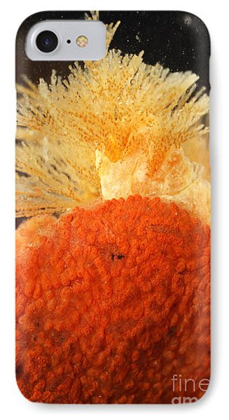 Bowerbanks Halichondria & Spiral-tufted Phone Case by Ted Kinsman