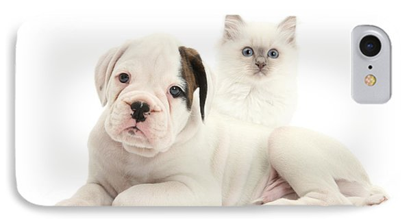 Boxer Puppy And Blue-point Kitten Phone Case by Mark Taylor