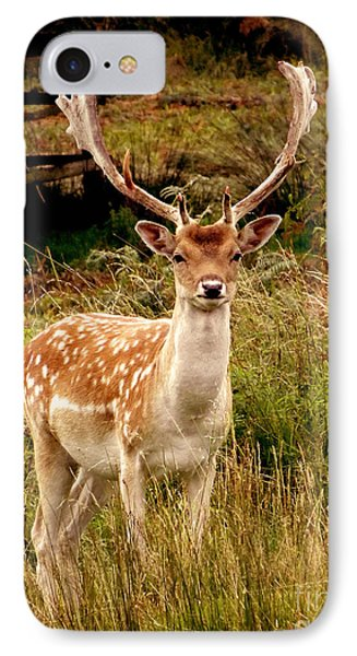 Wildlife Fallow Deer Stag IPhone Case by Linsey Williams