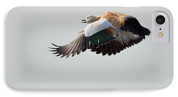 Brahminy Shelduck IPhone Case by Fotosas Photography
