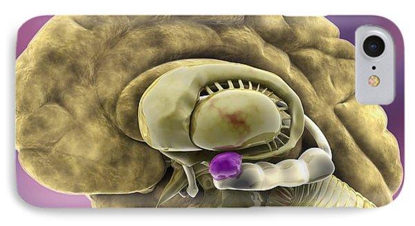 Brain Anatomy, 3d Artwork Phone Case by Ramon Andrade 3dciencia