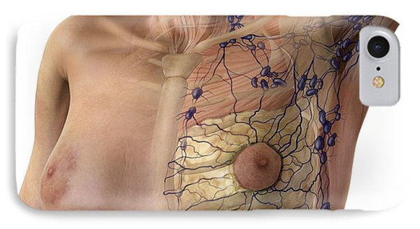 Breast Lymphatic System, Artwork IPhone Case by D & L Graphics