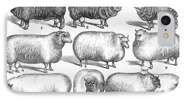 Breeds Of Sheep, 1876 Phone Case by Granger