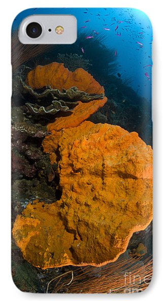 Bright Orange Sponge With Sunburst Phone Case by Steve Jones