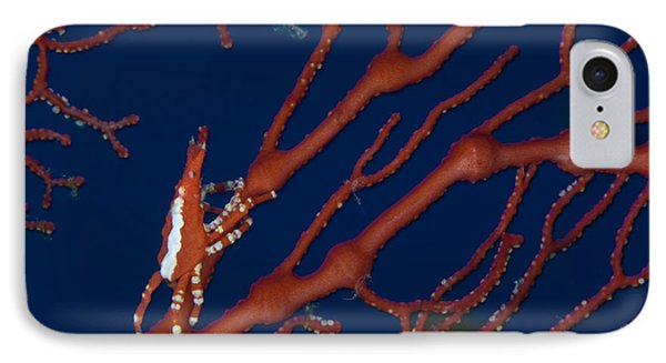 Bright Red Crab On Fan Coral, Papua New Phone Case by Steve Jones