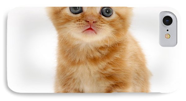 British Shorthair Red Tabby Kitten Phone Case by Jane Burton