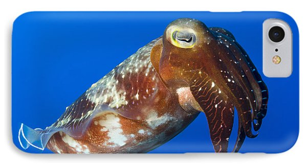 Broadclub Cuttlefish, Papua New Guinea Phone Case by Steve Jones