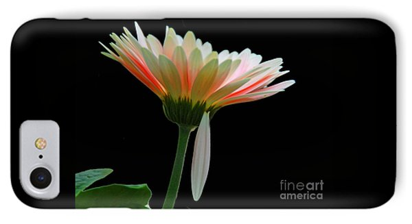 IPhone Case featuring the photograph Broken Daisy by Cindy Manero