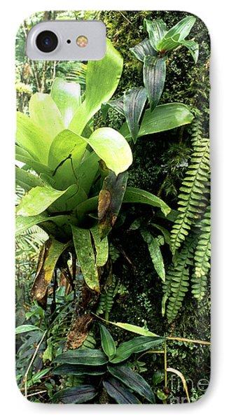 Bromeliad On Tree Trunk El Yunque National Forest Phone Case by Thomas R Fletcher
