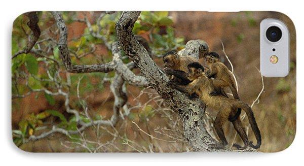 Brown Capuchin Cebus Apella Three Phone Case by Pete Oxford