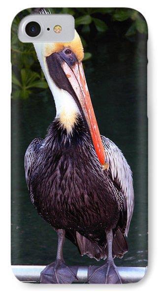 IPhone Case featuring the photograph Brown Pelican Islamorada by Maureen E Ritter