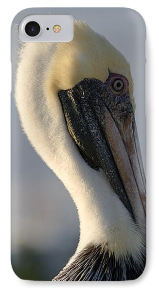 Brown Pelican Profile IPhone Case by Ed Gleichman