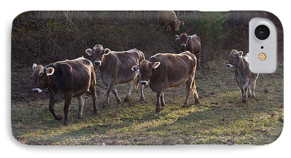 Brown Swiss Cows Coming Home IPhone Case by Douglas Barnett