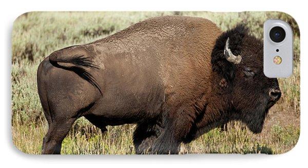 Buffalo Bull IPhone Case by D Robert Franz