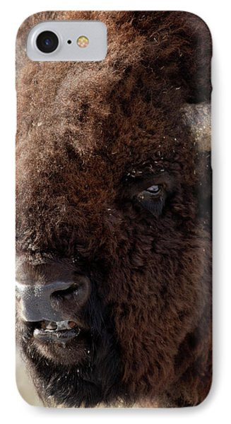 Bull Bison IPhone Case