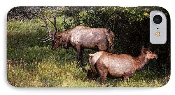 Bull Elk 7x7 IPhone Case by Ronald Lutz