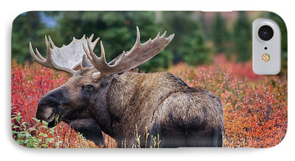 Bull Moose In The Fall Colors Phone Case by Thomas Payer