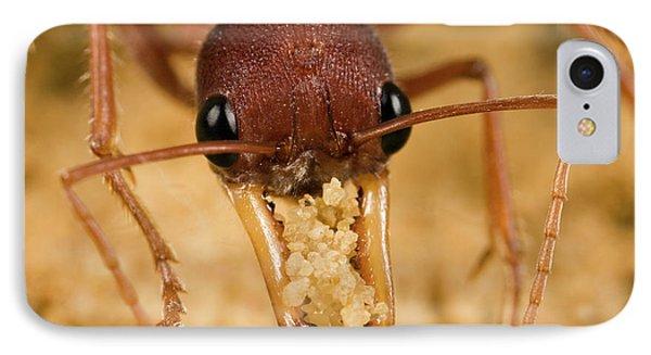 Bulldog Ant Myrmecia Gulosa Worker Phone Case by Mark Moffett