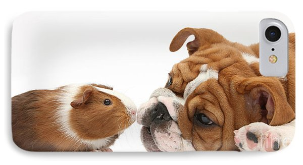 Bulldog Pup Face-to-face With Guinea Pig Phone Case by Mark Taylor