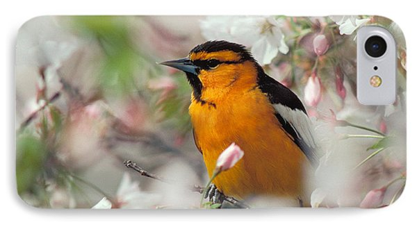 Bullock's Oriole IPhone Case