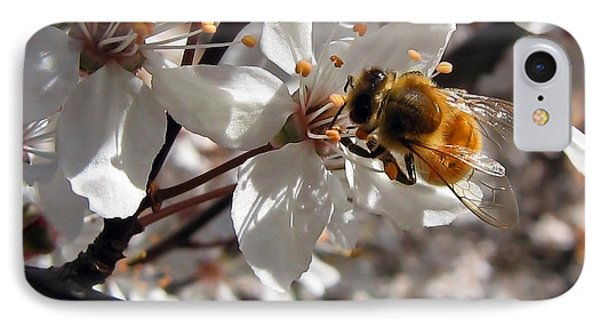 Bumble Bee On A Cherry Blossom IPhone Case by Tyra  OBryant