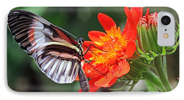 IPhone Case featuring the photograph Butterfly - Orange by Larry Nieland
