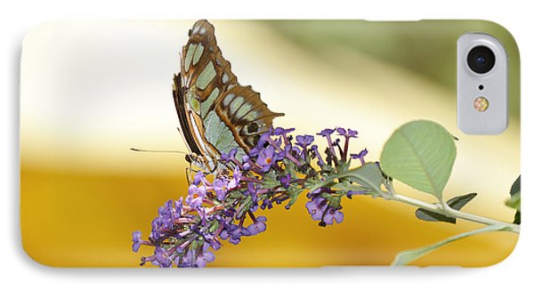 Butterfly Lavender Branch IPhone Case by Andrea Hazel Ihlefeld