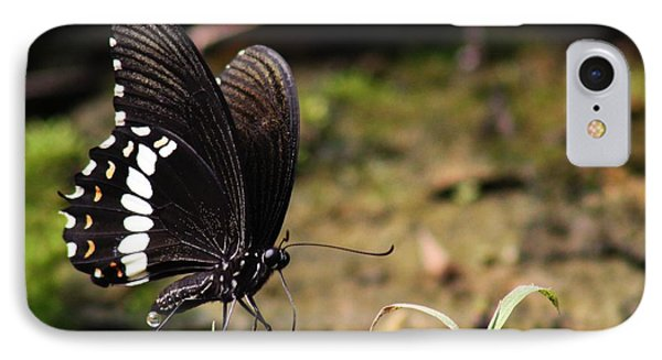 Butterfly Feeding  IPhone Case by Ramabhadran Thirupattur