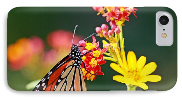Butterfly Monarch On Lantana Flower IPhone Case