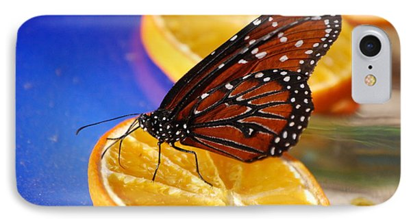 IPhone Case featuring the photograph Butterfly Nectar by Tam Ryan