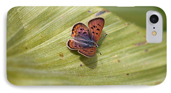 IPhone Case featuring the photograph Butterfly On Cornflower Leaf by Mitch Shindelbower
