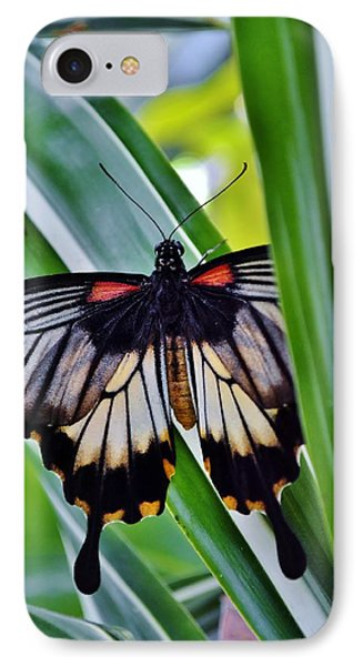 IPhone Case featuring the photograph Butterfly On Leaf by Werner Lehmann
