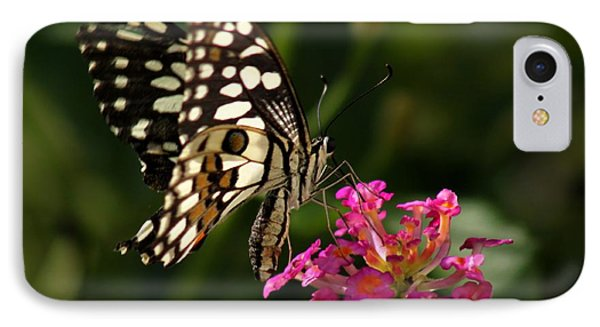 IPhone Case featuring the photograph Butterfly by Ramabhadran Thirupattur