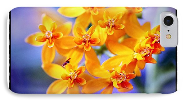 Butterfly Weed IPhone Case by Judi Bagwell
