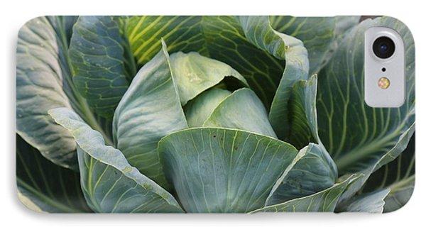 Cabbage In The Vegetable Garden Phone Case by Carol Groenen