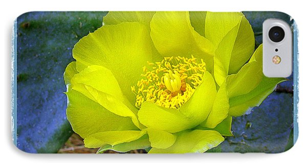 Cactus Flower IPhone Case by Judi Bagwell