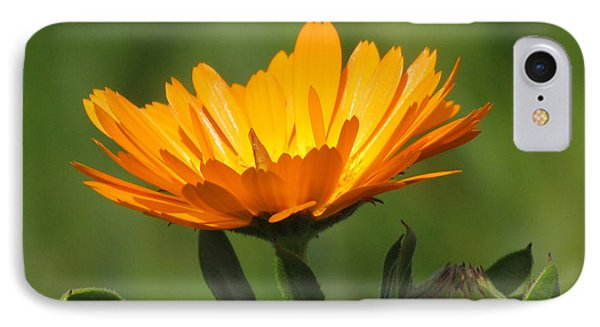 Calendula Bloom IPhone Case by Bonnie Muir