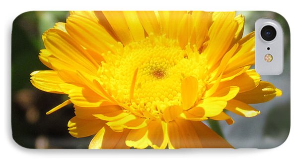 Calendula Blossom IPhone Case by Bonnie Muir