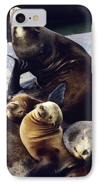 California Sea Lions Phone Case by Alan Sirulnikoff