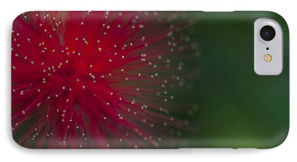 Calliandra IPhone Case