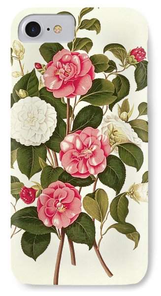 Camellia Phone Case by English School