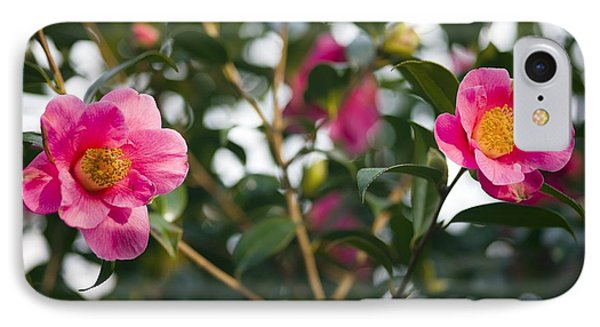 Camellia Flower (camelia Japonica) Phone Case by Dr Keith Wheeler