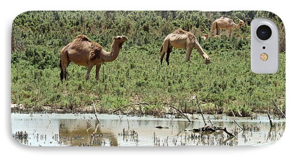 IPhone Case featuring the photograph Camels 02 by Arik Baltinester