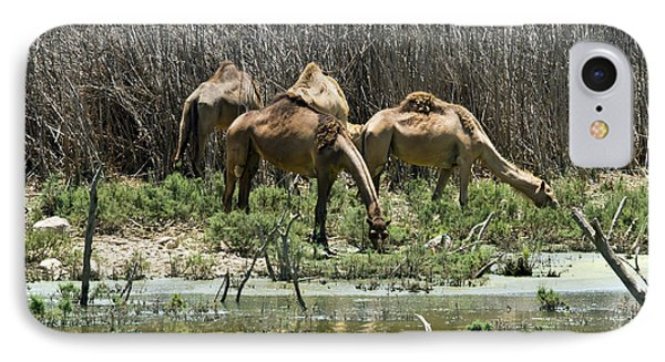 IPhone Case featuring the photograph Camels At The Water by Arik Baltinester