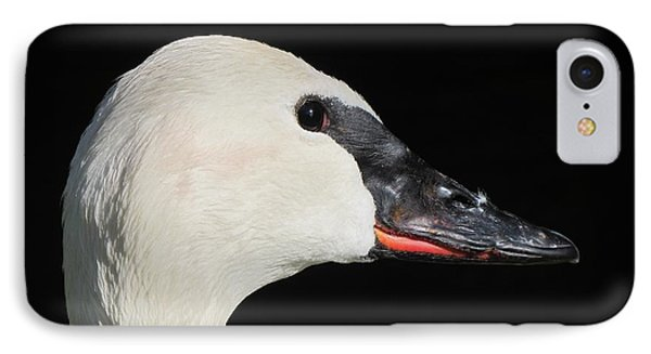 IPhone Case featuring the photograph Trumpeter Swan by Maciek Froncisz