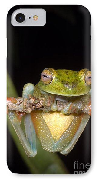 Canal Zone Tree Frog Phone Case by Dante Fenolio