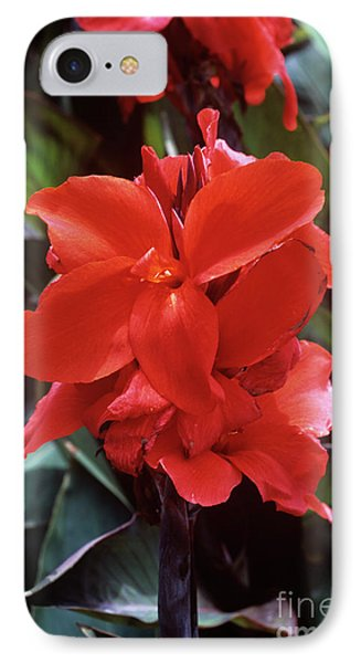Canna Lily 'assaut' Phone Case by Adrian Thomas