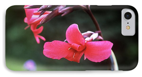 Canna Lily (canna X Ehemanii) Phone Case by Adrian Thomas