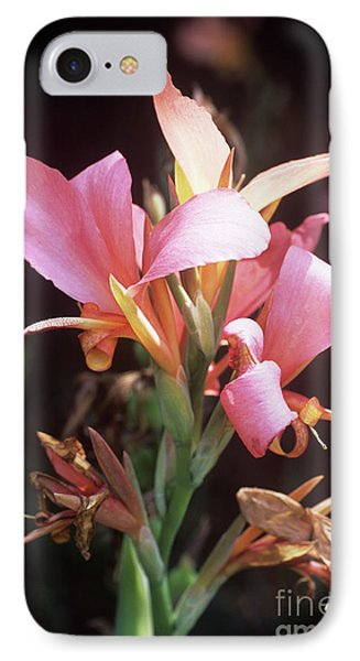 Canna Lily 'erebus' Phone Case by Adrian Thomas